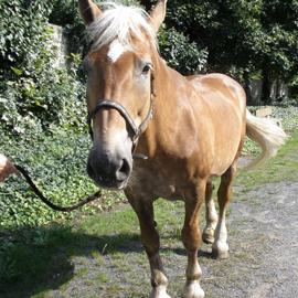 Hipoterapeutický kůň jménem Birma