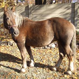 Hipoterapeutický kůň jménem Kora