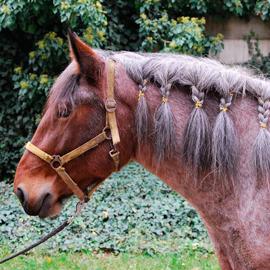 Hipoterapeutický kůň jménem Rybana.