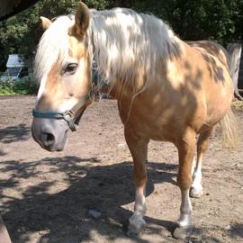 Hipoterapeutický kůň jménem Šárka.